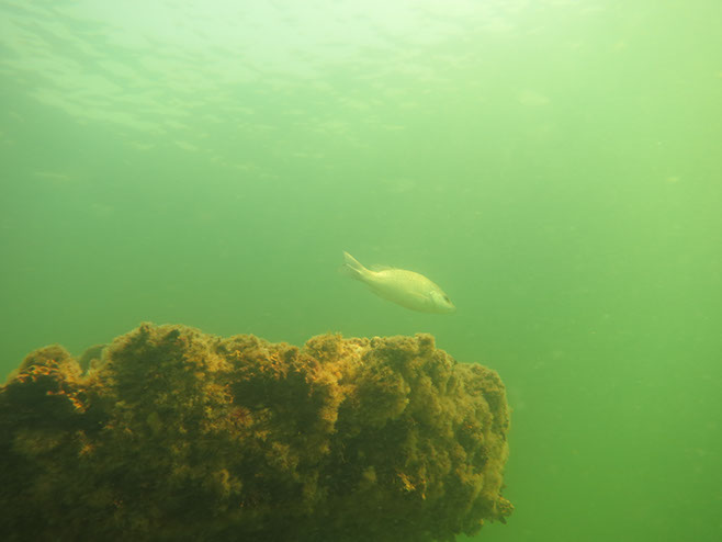 Navarre Beach Gulf Snorkel Reef Navarre Fl